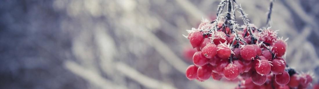 7020200-berries-nature-winterb
