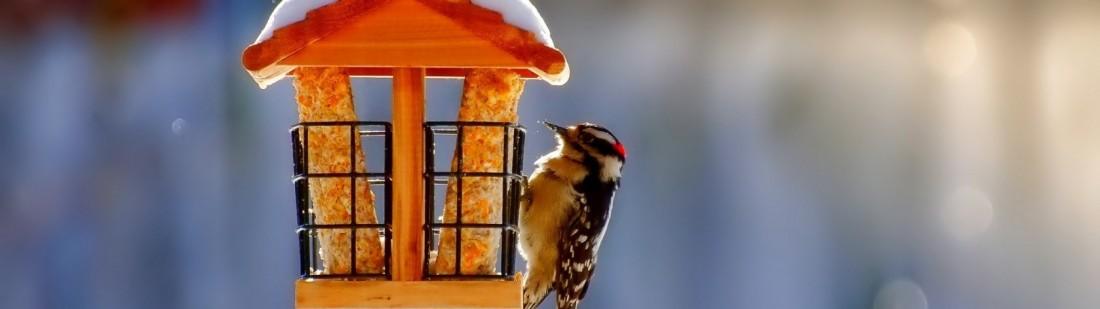 Birdhouse-Bird-Winter-Snow-Nature-Wallpaperb