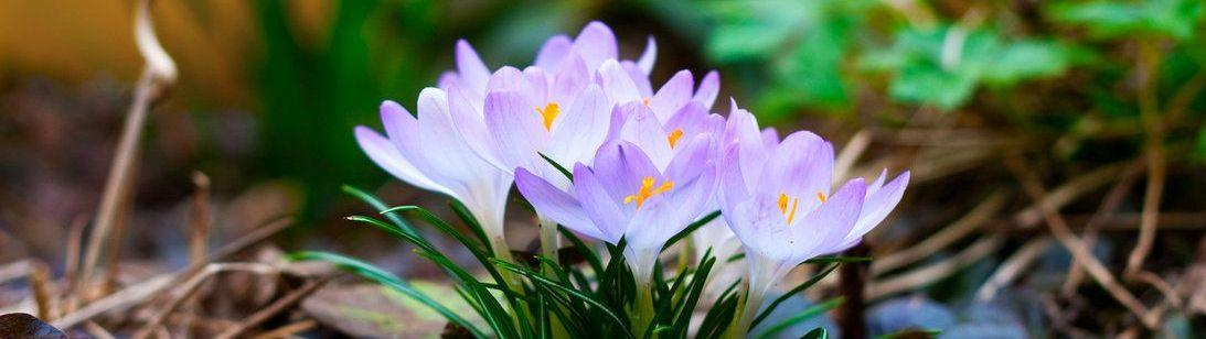 Springflowers_Wallpaper_by_Lorem1psuma