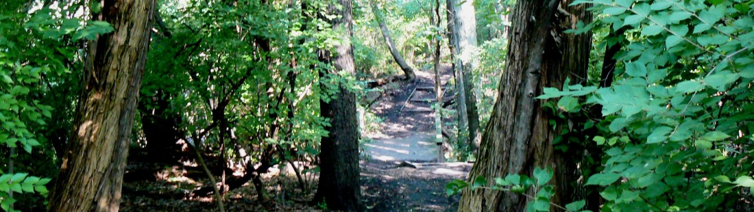 Tarpy Woods031