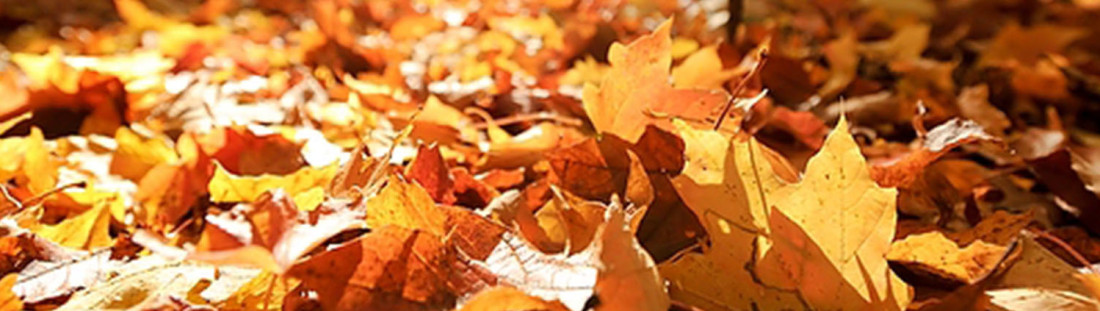 leavesthanksgiving